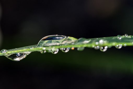 Rain, Water, Wet, Drip, Reflection, Halm, Plant, Green