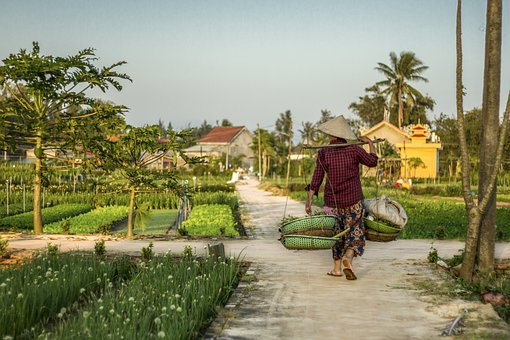 Hoi An, Farm, Farmer, Plantation, Agriculture