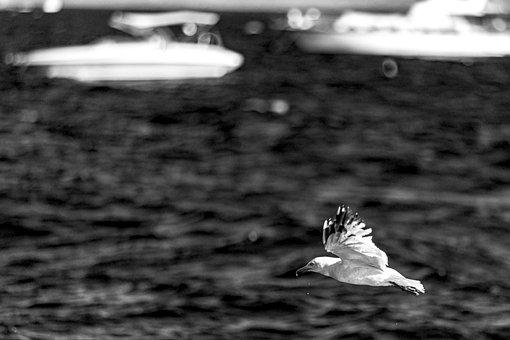 Seagull, Bird, Flight, Wings, Flying Bird, Flying