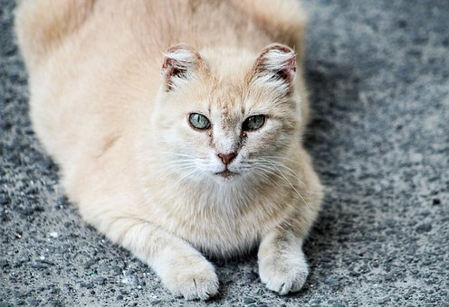Cat, Kitty, Kitten, Young, Animal, Curious, Eyes, Furry