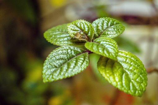 Leaves, Foliage, Plants, Indoor, Texture, Flora, Botany