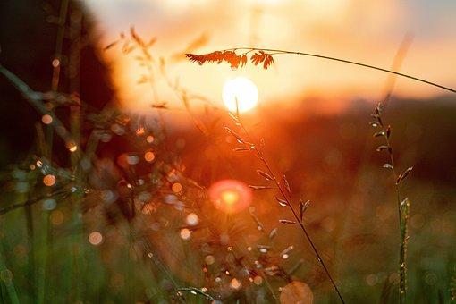 Field, Plants, Weeds, Rain, Dew, Rain Drops, Sunset
