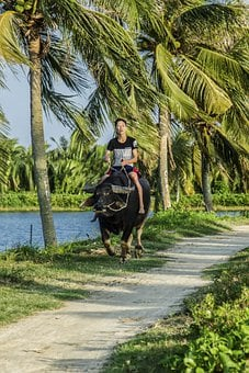 Vietnam, Hoi An, Asia, Travel, Culture, River