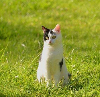Cat, Black And White, Animal, Adidas, Pet, Domestic Cat