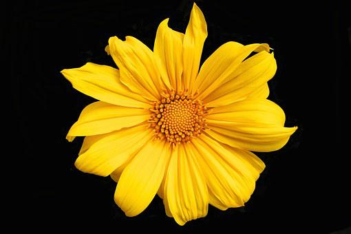 Yellow, Flower, Spring, Garden, Plant, Color, Blossom