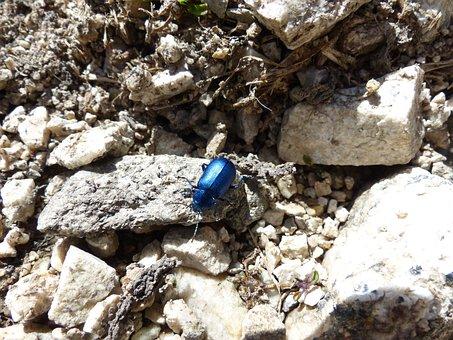 Beetle, Blue, Glazed Includes, Leaf Beetle