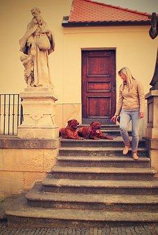 Bordeaux, De, Dogue, Street, Mastiffs, French, Two, Pet