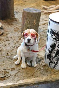 Dog, Animal, Specs