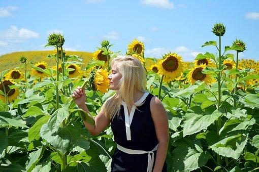 Sunflowers, Blond, Girl, Field, Smell, Summer