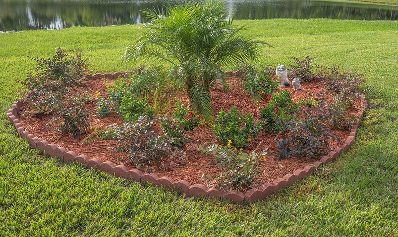 Landscape, Tropical, Palm Tree, Flowers