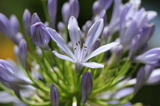 Purple, Plant, Blossom, Bloom, Nature, Garden, Flower