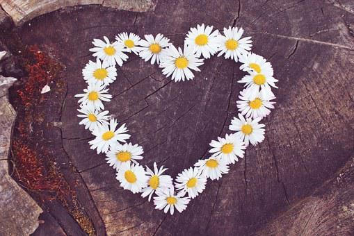 Daisy, Heart, Flower Heart, Heart Shaped, Flowers
