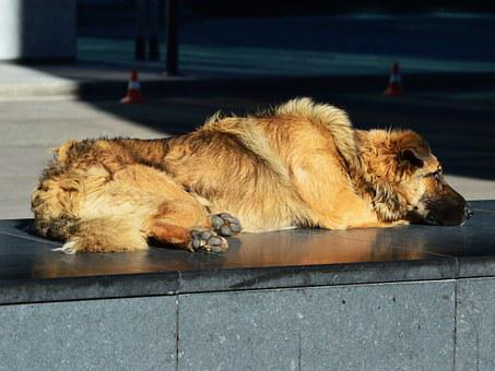 Homeless, Stray, Dog, Sleeping, Relaxing, Lonely