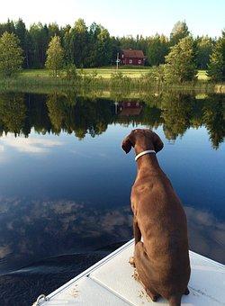 Dog, German Shorthaired Pointer, Brown, Mirror, Lake
