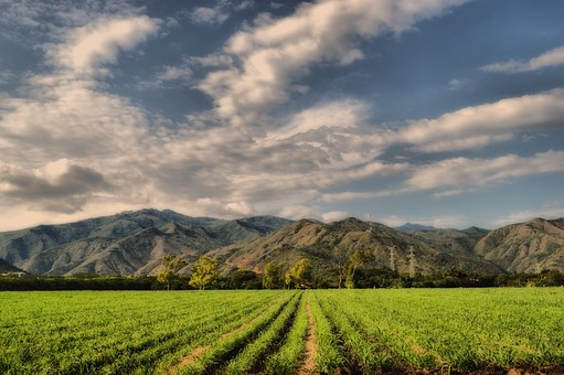 Mountains, Crops, Cane, Field, Clouds, Sky, Green