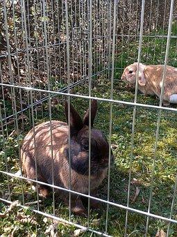 Rabbit, Brown Black, Freewheel, Spoon, Mümmel, Meadow