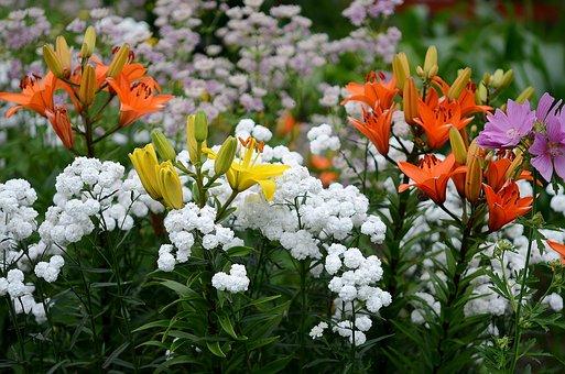 Flower, Nature, Macro, Red, Yellow, White, Purple