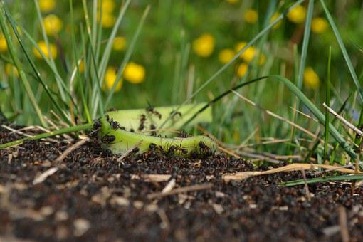 Ants, Plants, Nature, Insect, Green, Macro, Wildlife
