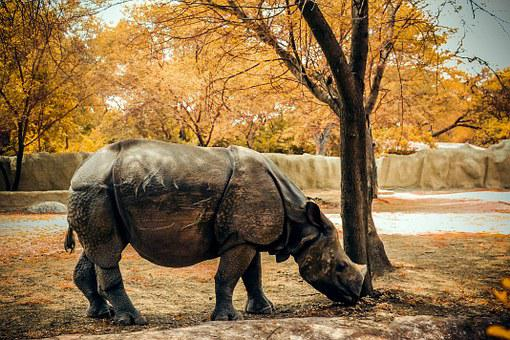 Rhino, Nature, Animal, Wild, Wildlife, Africa, Mammal