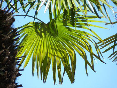 Palm, Leaf, Wedel, Green, Leaves, Structure, Palm Leaf