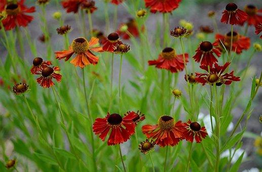 Flower, Nature, Macro, Red, Blue, Yellow, White, Purple