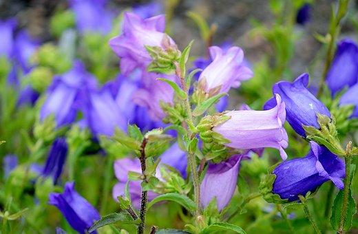 Harebells, Flower, Nature, Macro, Red, Blue, Yellow