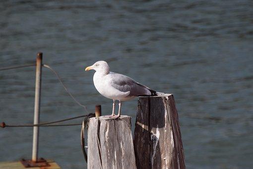 Seagull, Staten Island, New York, United States