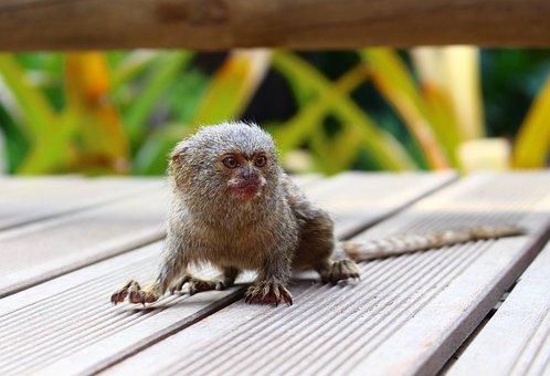 Small Monkeys, Mono, Nature, Animal, Colombia