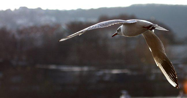 The Seagull, Backlight, Smichov