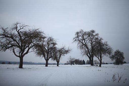 Snow Landscape, Frost, Wintry, Winter, Apple Tree