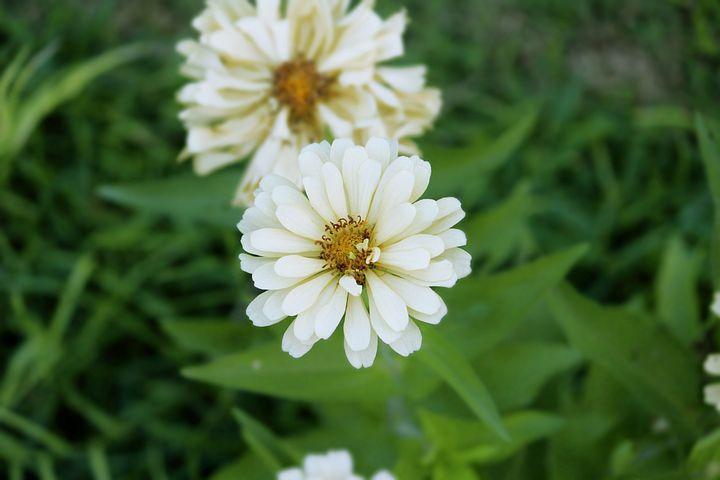 Sun, Flower, Green, Nature, Spring, Yellow, Summer