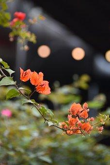 Confetti, Flower, Bloom, Showy, Summer, Color