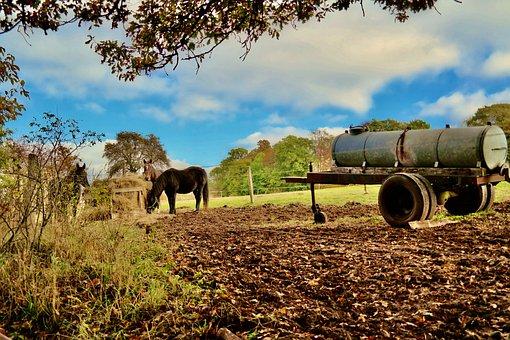 Horses In Barn, Barn, Village, Farm, Nature, Country