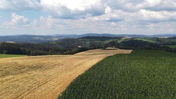 Field, Plants, Grain, Harvest, Agriculture, Clouds