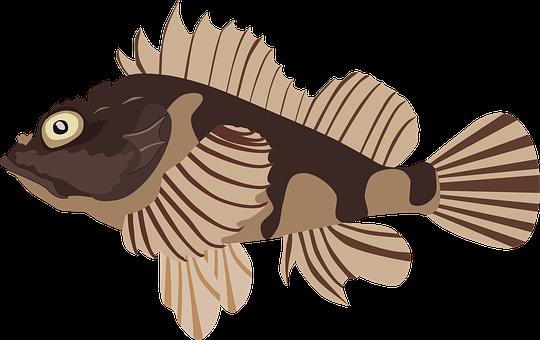 Scorpionfish, Fish, Sea, Aquarium, Underwater, Marine