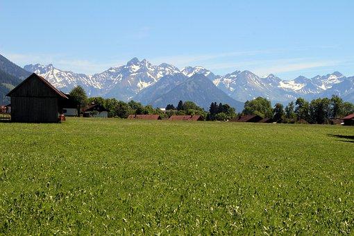 Meadow, Field, Landscape, Grass, Grassland, Nature