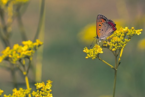 Butterfly, Yellow Flower, Nature, Petals, Insect, Flora