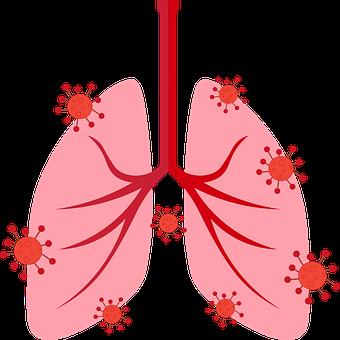 Breath, Lungs, Respiratory, Respiratory System, Organ