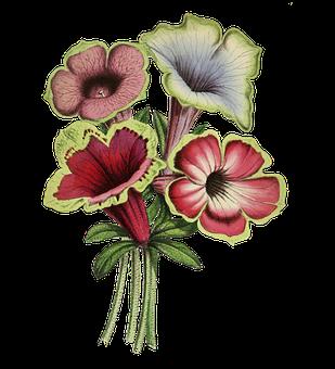 Flowers, Petunia, Petals, Bouquet, Bloom, Nature