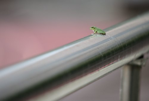 Frog, Amphibian, Green Frog, Small Frog, Handrail