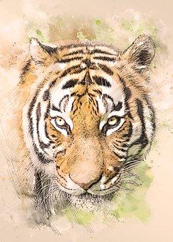 Tiger, Tiger Head, Portrait, Predator, Cat, Feline