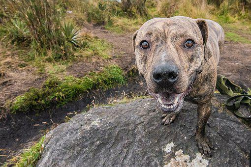 Kill Round, Paramo, Lake, Dog, Colombia, Moor
