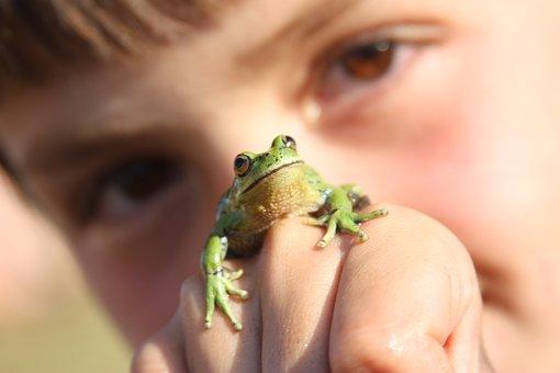 Child, Frog, Amphibian, Animal, Nature