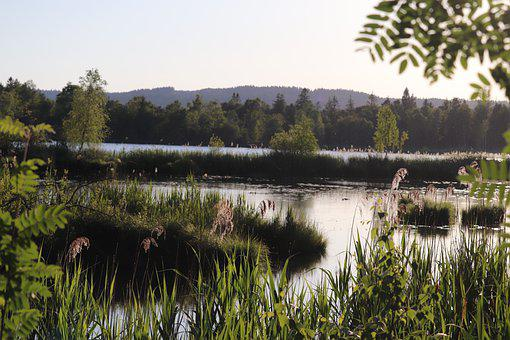 Moor, Lake, Nature, Landscape, Swamp, Nature Reserve