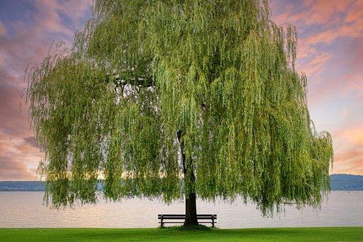 Sunset, Tree, Leaves, Foliage, Bench, Bank, Lake, Water