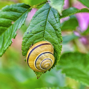 Snail, Shell, Spiral, Mollusk, Foliage, Leaves