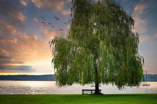 Lake, Tree, Water, Nature, Sunset, Sunrise, Dawn, Sky