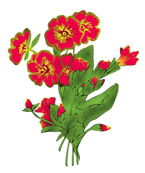 Primula, Primrose, Flowers, Background, Wallpaper