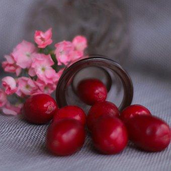 Dogwood, Berry, Nature, Tree, Berries, Romance, Retro
