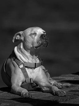 Dog, Canine, Pet, Animal, Sunbathing, Sleeping, Fauna